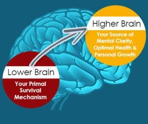 bigger-brain